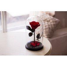 Вечная роза в колбе красная