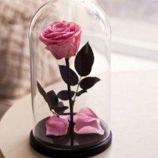 Вечная роза в колбе розовая